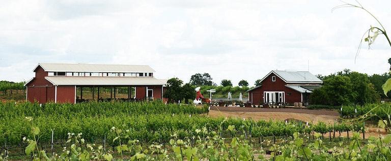 Vino Noceto grape farm